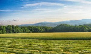 A photo of a field with trees and mountains in the background.